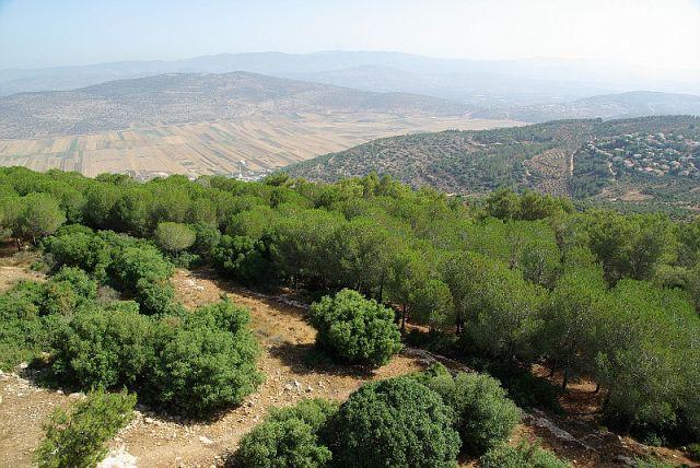 Image result for израиль технологии озеленения